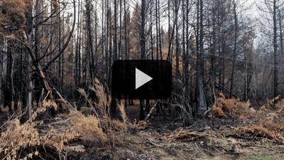 Husqvarna - Uniendo fuerzas luego de los incendios en el Sur